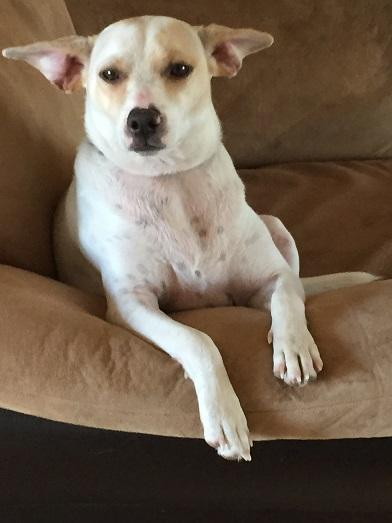 Adopt A Dog Boulder Colorado