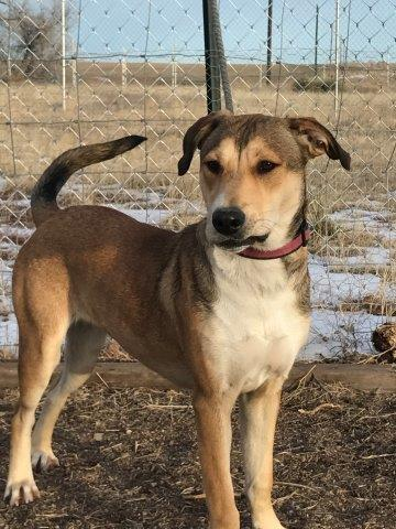 dog adopted from Denver sheleter